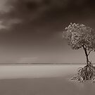 Low Tide at Yule's Point.....One Mangrove Tree by Imi Koetz