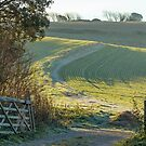 Field and Gateway on South Downs by Sue Robinson