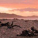 Driftwood on Gillespies Beach, New Zealand by Elana Bailey