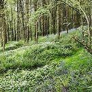 Woodland carpet by John Edwards