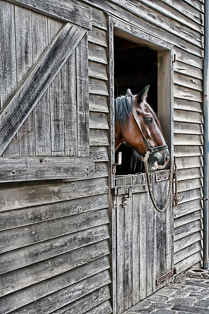 Stabled by Samantha Cole-Surjan