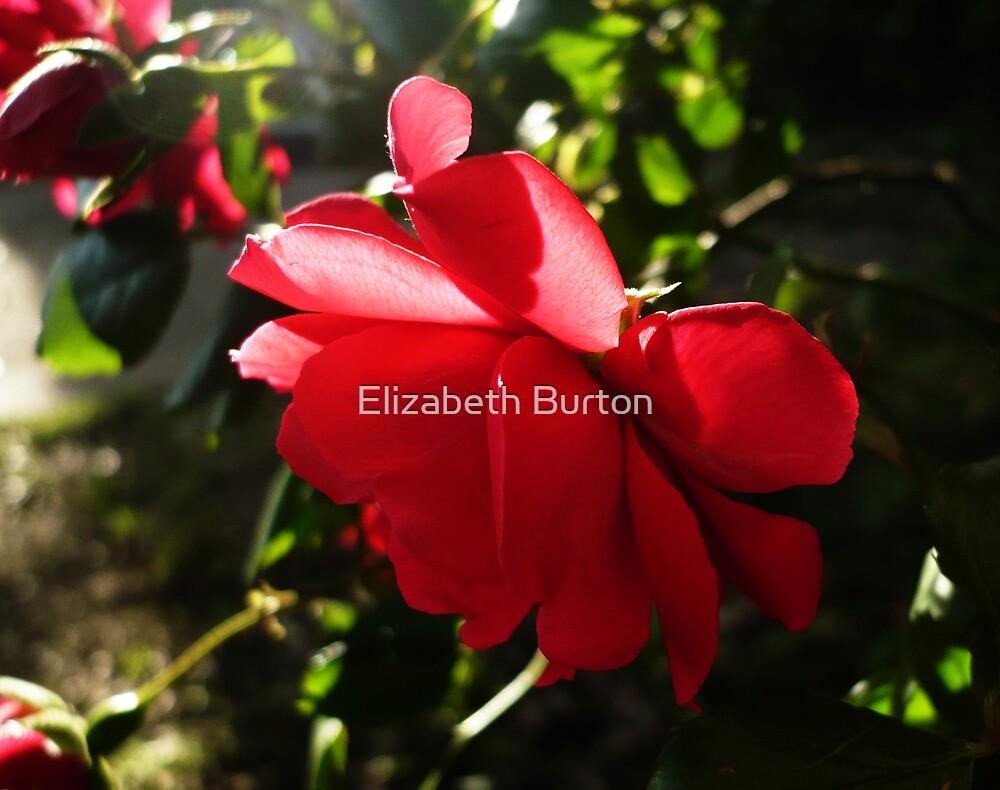 Sun Kissed by Elizabeth Burton