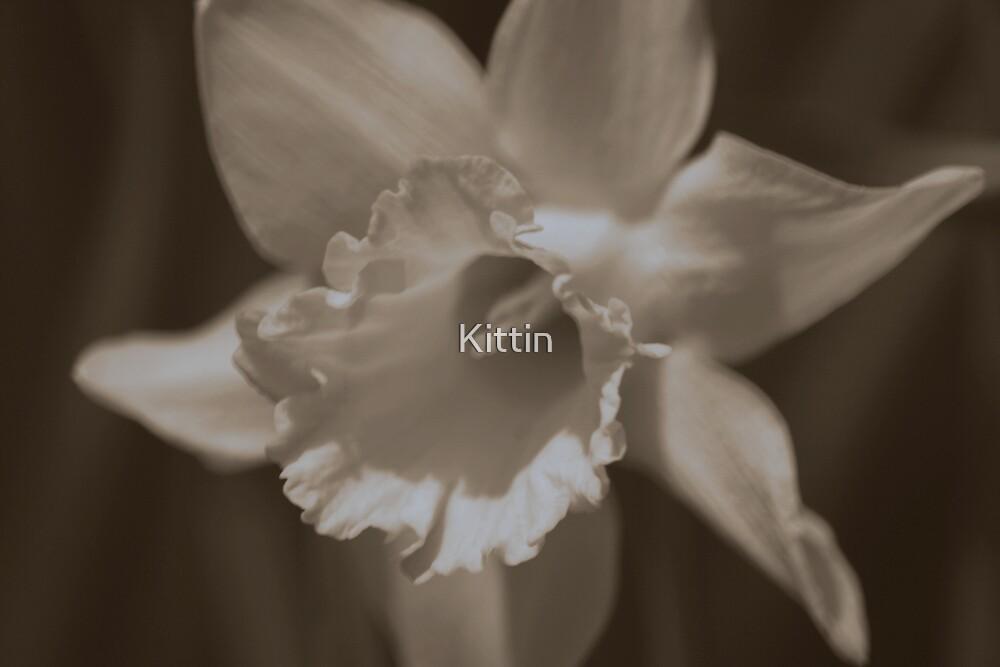 flower 13 by Kittin