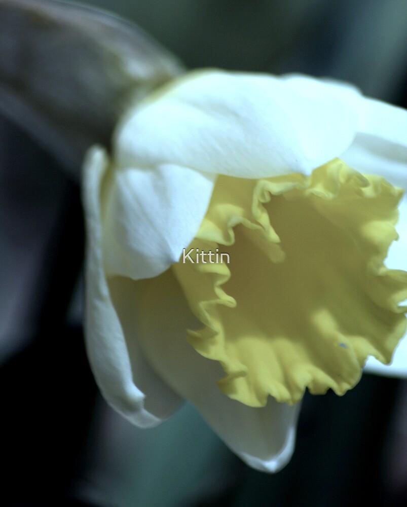 flower 37 by Kittin
