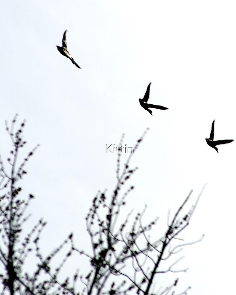 geese 01 by Kittin