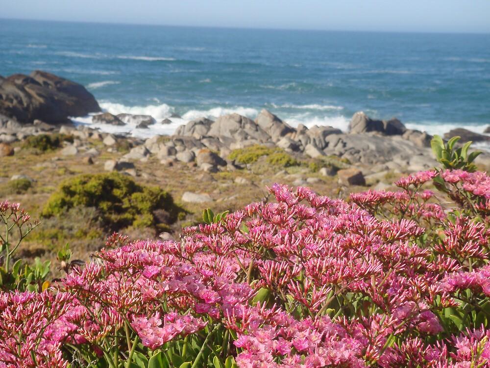 West Coast by Edelweiss