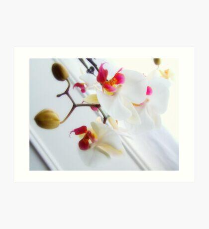 White Orchid No4 Art Print