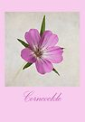 Corncockle by inkedsandra
