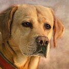 Labrador by lucyliu