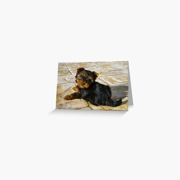 Our Guard Dog Tara Greeting Card