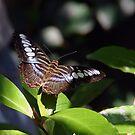 butterfly by edlogsdon