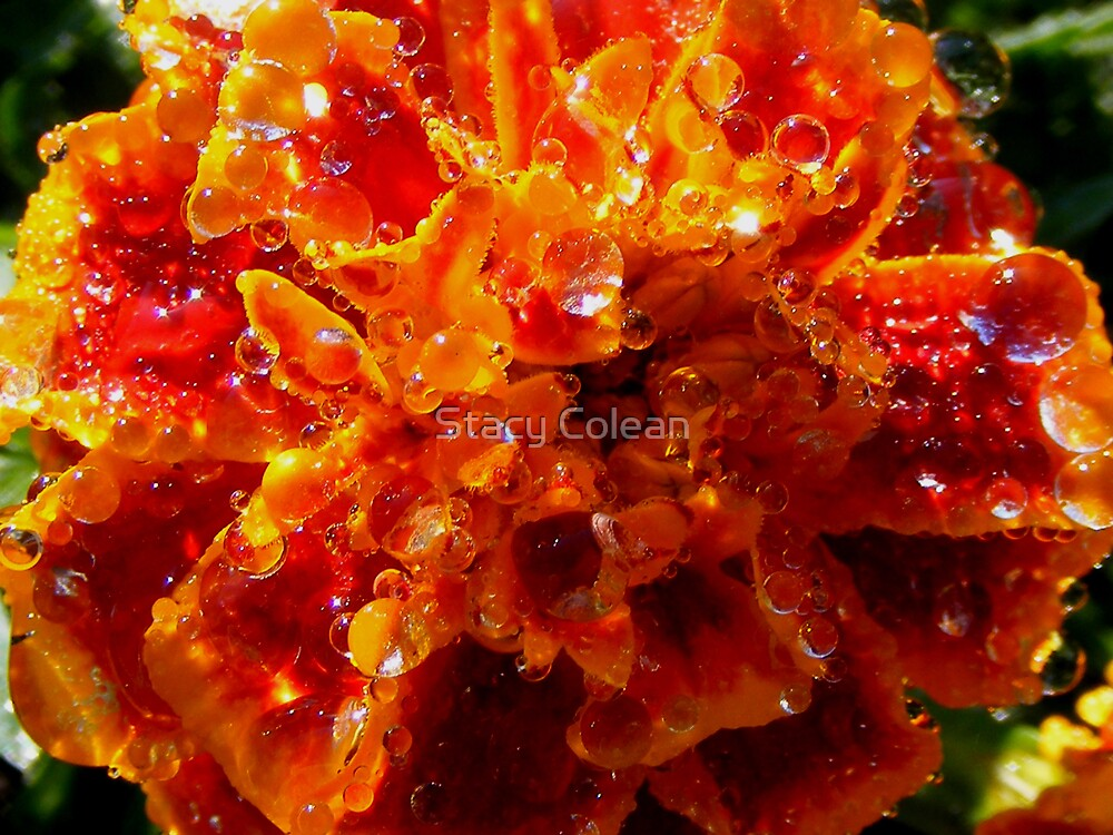 Drops of color.. by Stacy Colean