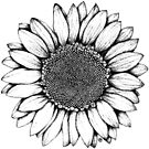 Sunflower by . VectorInk