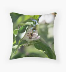 Bee on the Quince Flower Throw Pillow