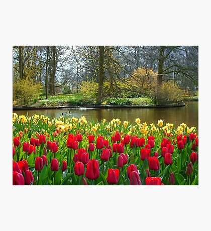 Its Spring!! Photographic Print