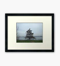 Entrapment Framed Print
