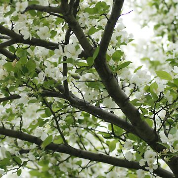 Spring Tree by Dmargie