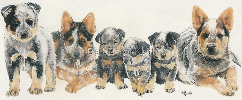 Australian Cattle Dog Puppies by BarbBarcikKeith