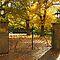 Autumn Colours in Victoria Australia
