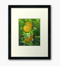 Oranges and Blossoms [Orange Tree] Framed Print