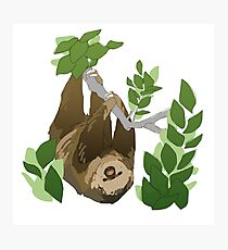 A Sloth Photographic Print