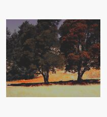 Oak Trees. Photographic Print