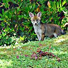 fox cub  by marxbrothers