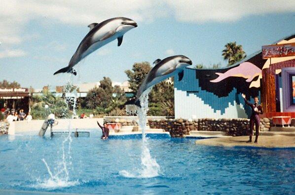 dolphin flying by cometkatt