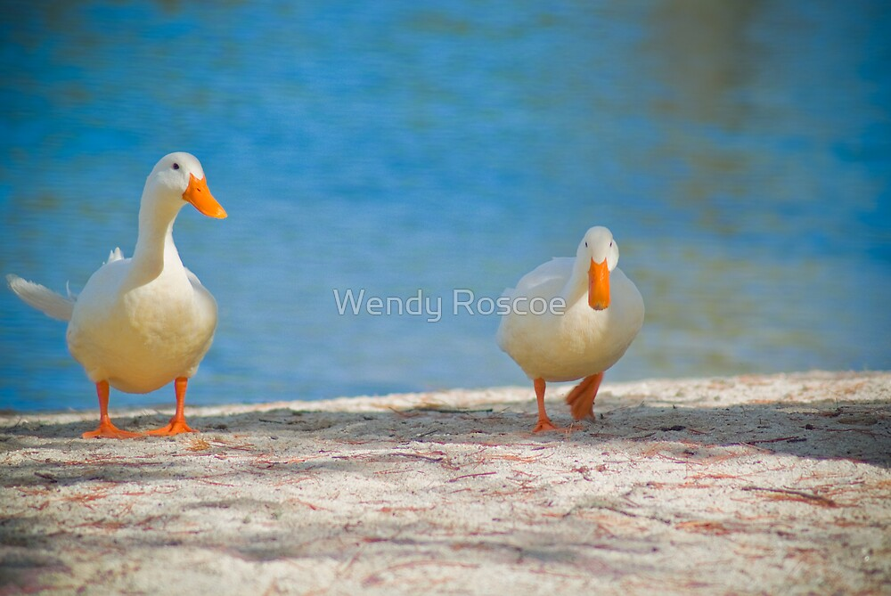 Two Ducks by Wendy Roscoe