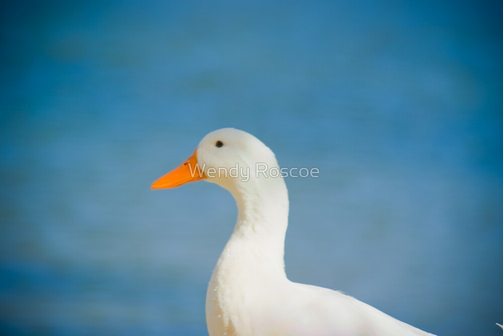 One Duck by Wendy Roscoe