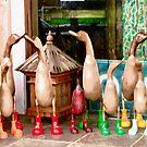 Ducks by Shulie1