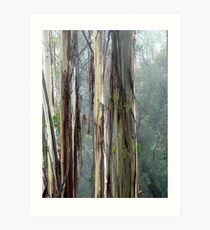 Australian Bush- Stringy Bark Art Print