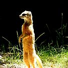 Standing Mongoose by Barnbk02