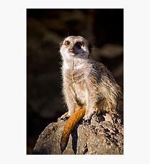 Meerkat at Sunset Photographic Print