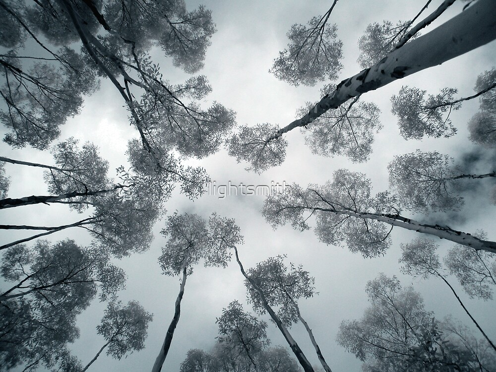 You Yangs Up Tree - Variations on a Theme - Two by lightsmith