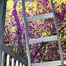 stairway to heaven by Sandra Hopko
