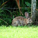 In the immortal words of ' Bugs Bunny '...........' What's up Doc.......? ' by Roy  Massicks