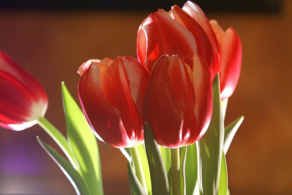 Red Tulips by Lisa Miller