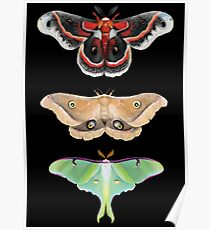 Giant Silk Moth Tier Poster