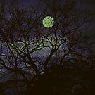 Mystische Nacht von Evita