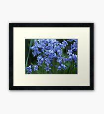 Bluebells III Framed Print