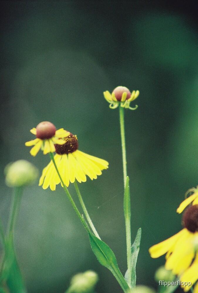 swamp flowers by flipperflopp