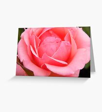Blushing Rose Greeting Card