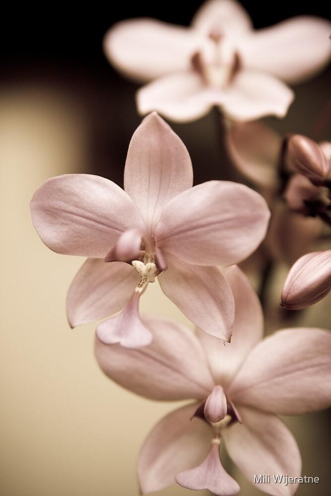 Inner Beauty by Mili Wijeratne