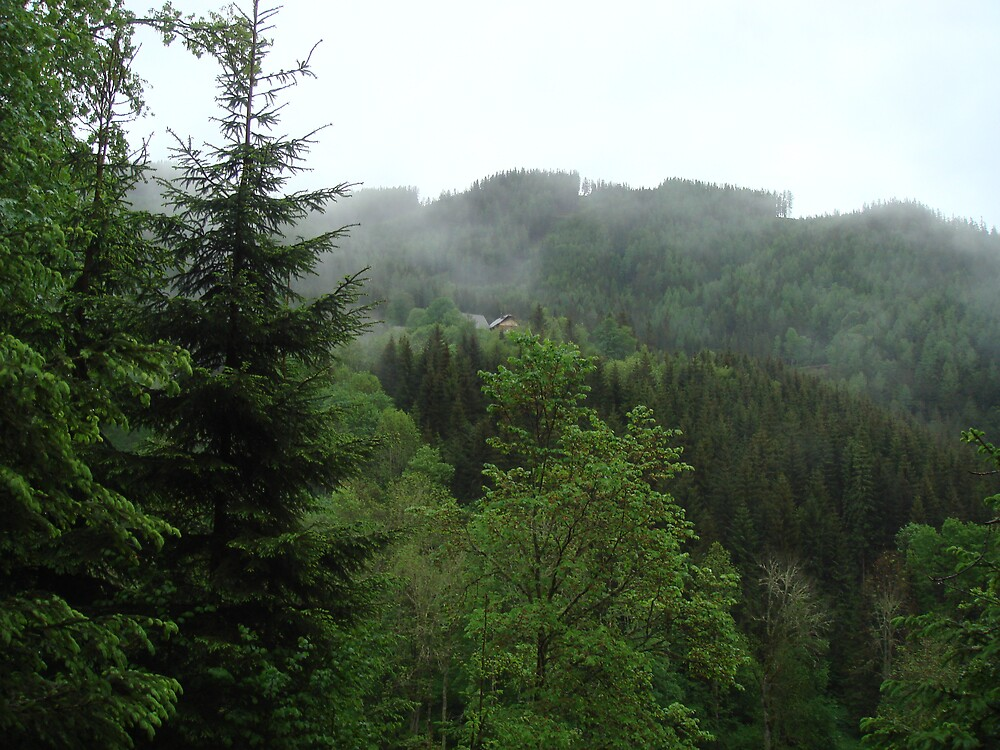 Forest in Austria by Edelweiss