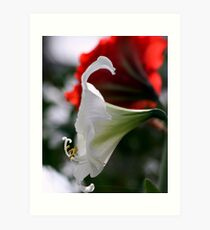 lily 11 Art Print