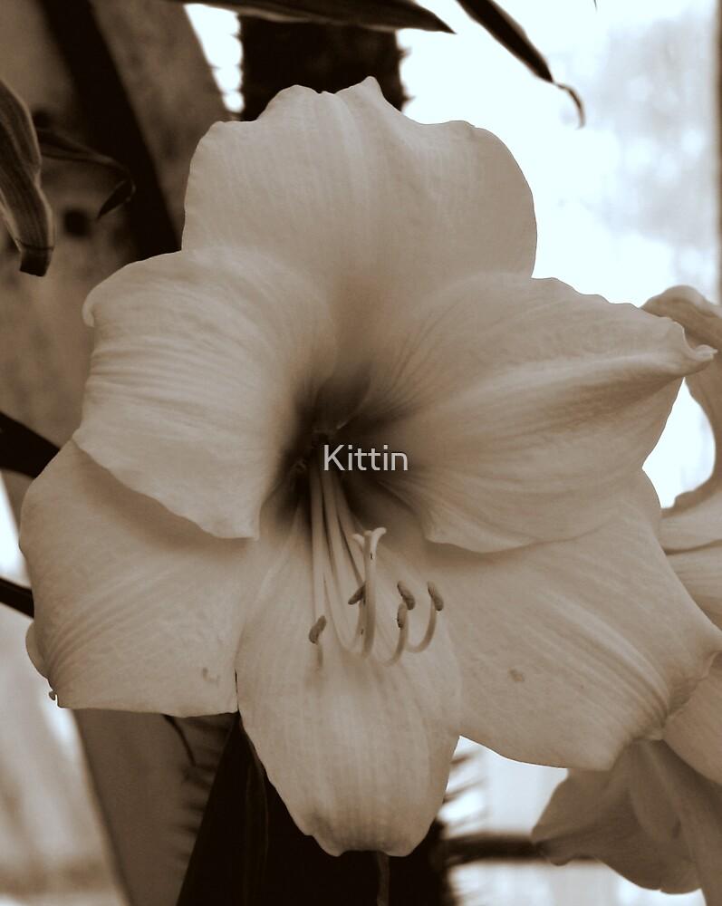 lily 19 by Kittin