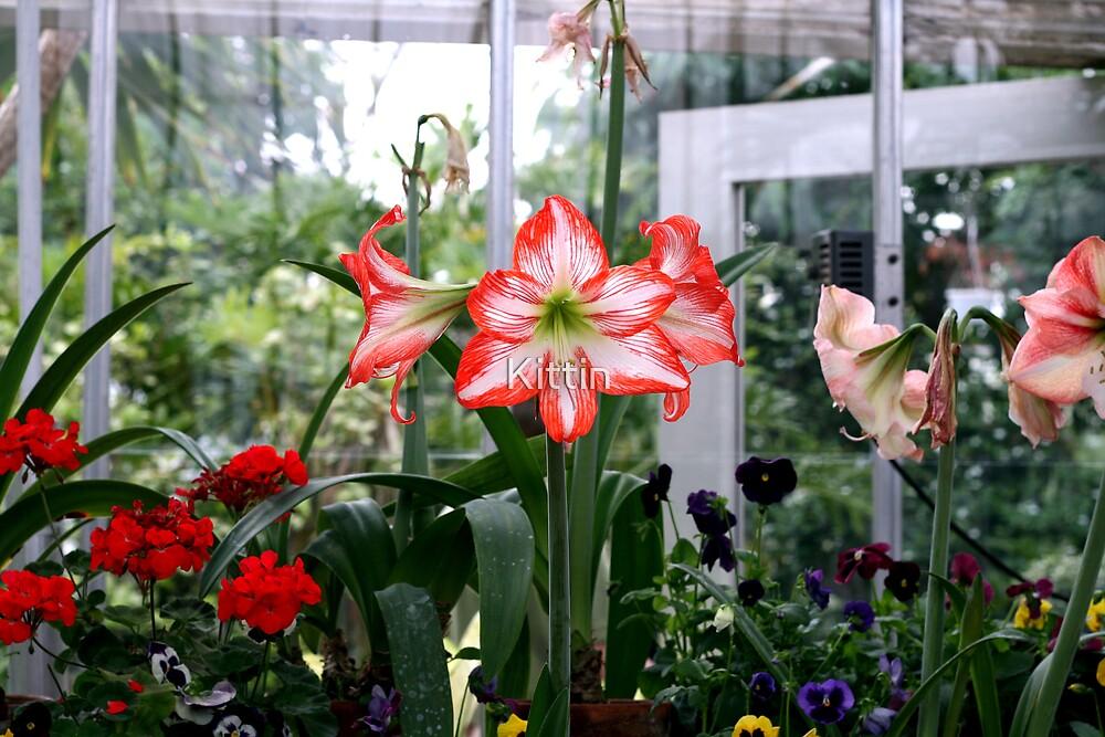 greenhouse 01 by Kittin