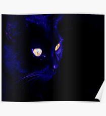 Prowling Black Cat  Poster