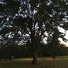 One Big Beautiful Tree by trisha22